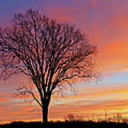 Bare Trees At Dawn Poster