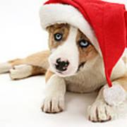 Border Collie Puppy Poster by Jane Burton
