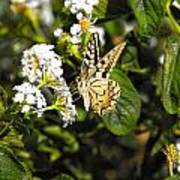Butterfly On Blooming Flowers Poster