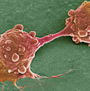 Cancer Cell Dividing, Sem Poster