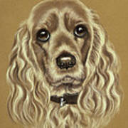 Cocker Spaniel Poster by Patricia Ivy