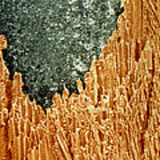 Coloured Sem Of A Sharpened Pencil Poster