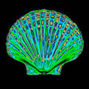 Coloured X-ray Of A Pecten Scallop Shell Poster