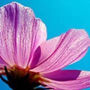 Cosmia Flower Poster