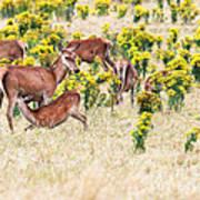 Deers Poster by MotHaiBaPhoto Prints