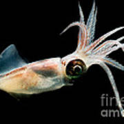 Eye Flash Squid Poster