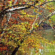 Fall Along West Fork River Poster by Thomas R Fletcher