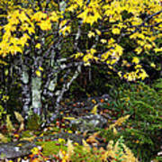 Fall Color Highland Scenic Highway Poster
