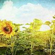 Field Of Colorful Sunflowers And Blue Sky  Poster