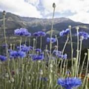Field Of Flowers In Rural Landscape Poster
