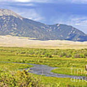 Great Sand Dunes Bison Poster