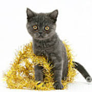 Kitten With Tinsel Poster