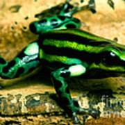 Pasco Poison Frog Poster