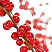 Red Christmas Berries Poster by Elena Elisseeva