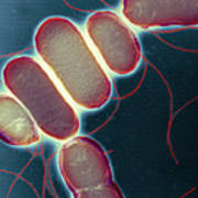 Salmonella, Tem Poster by Henrik Chart, Centre For Infectionshealth Protection Agency