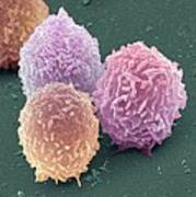 White Blood Cells, Sem Poster