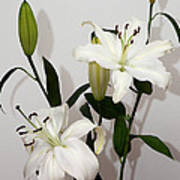 White Lily Spray Poster