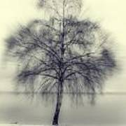 Winter Tree Poster by Joana Kruse