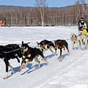 2010 Limited North American Sled Dog Race Poster
