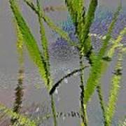 Water Reed Digital Art Poster