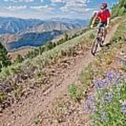 Mountain Bike Poster