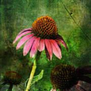 3 Amigos Echinacea Coneflower Grunge Art Poster