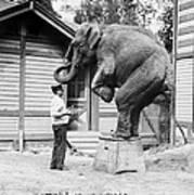 Bill Snyder, Elephant Trainer Poster by Everett