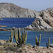 Cardon Pachycereus Pringlei Cacti Poster