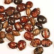 Castor Beans Poster