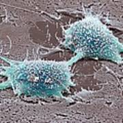 Dividing Cancer Cell, Sem Poster