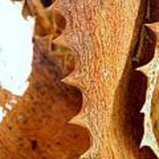 Dry Brown Aloe Vera Leaf Poster