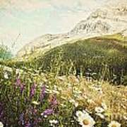 Field Of Daisies And Wild Flowers Poster