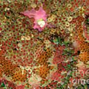 Fluorescent Sea Anemone Poster