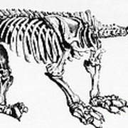 Megatherium, Extinct Ground Sloth Poster