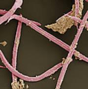 Nematode Worms, Sem Poster