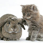 Rabbit And Kitten Poster