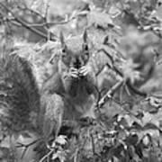 Squirrel Dinner Poster