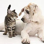 Tabby Kitten & Great Dane Pup Poster