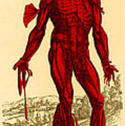 Vesalius De Humani Corporis Fabrica Poster