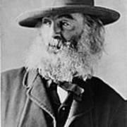 Walt Whitman, American Poet Poster