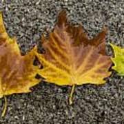 3 Wet Leaves Poster