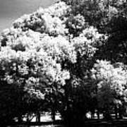 Picnic Tree Poster