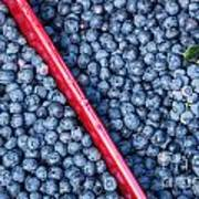 Blueberry Harvest Poster
