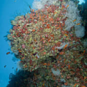 Colourful Reef Scene, Ari And Male Poster