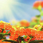 Floral Background. Lantana Flowers Poster