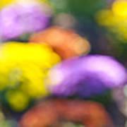 Flower Garden In Sunshine Poster
