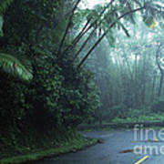 Misty Rainforest El Yunque Poster