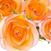 4 Roses Over White Poster