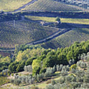 Vineyards And Olive Groves Poster