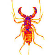 Whipscorpion X-ray Poster